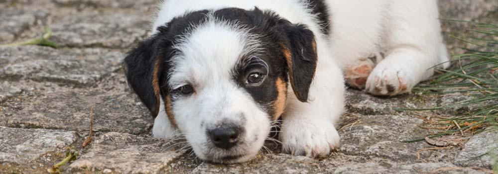 Durchfall Beim Hund – Was Tun